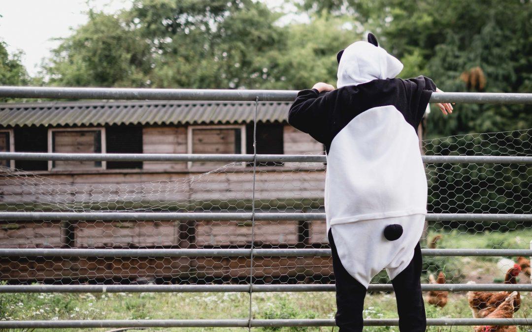 Panda at the farm